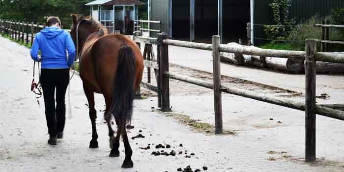 Paard met Trauma Behandeling Tips en Advies