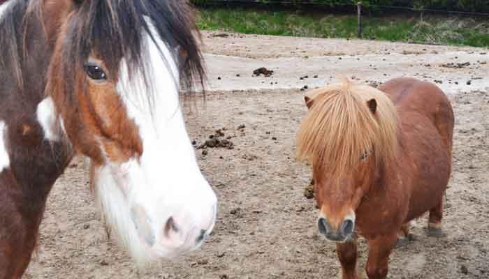 Paarden Karaktertypes Uitleg en Informatie