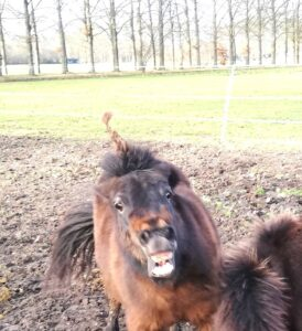 paard bijt