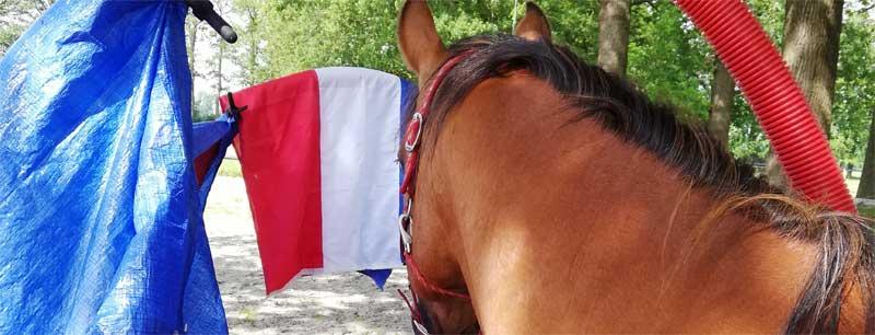 Getraumatiseerd paard vertrouwen geven advies tips en informatue