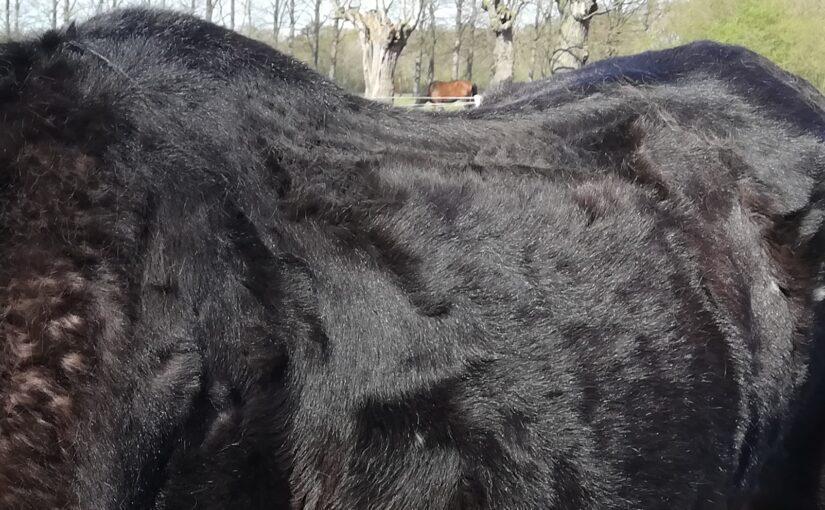Verwaarloosd paard gezond krijgen