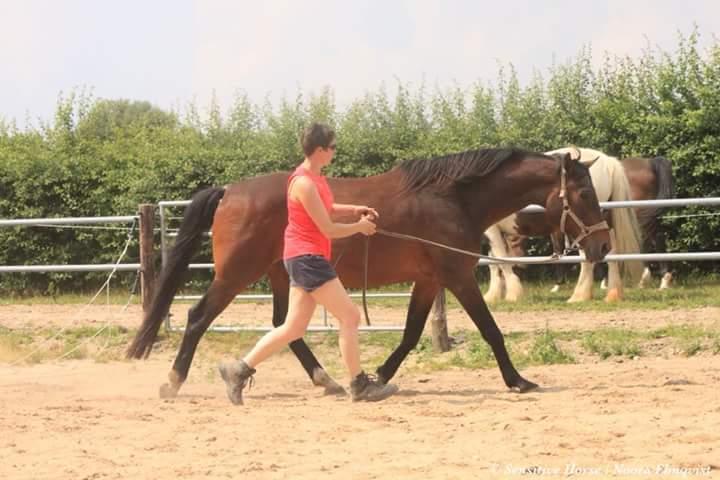 Achterhand paard beter trainen tips advies en uitleg