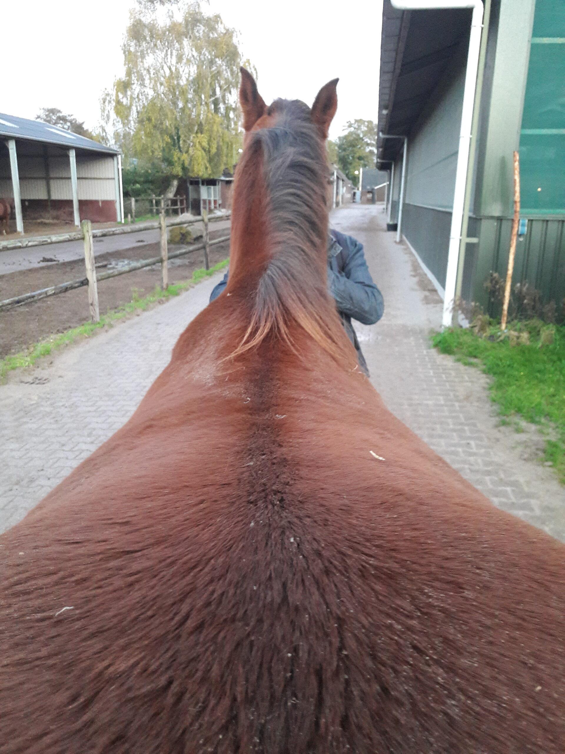 Ongelijke schouders paard