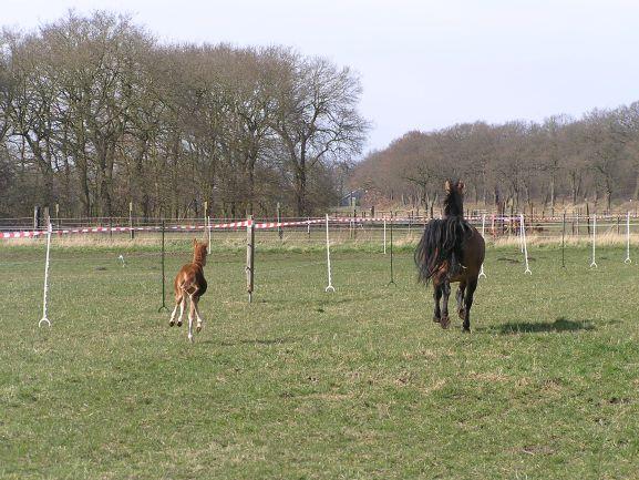 Stress bij paarden tips en advies bij de omgang met een gestrest paard