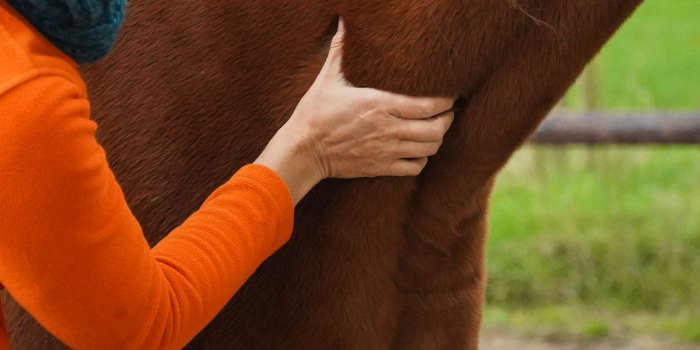 Blessure paard voorkomen tips