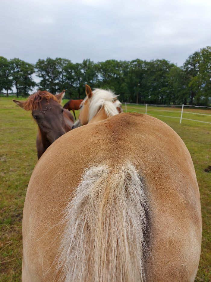 Heeft elk paard blessures