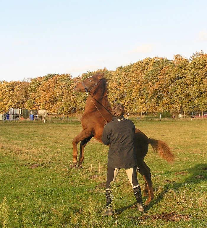 Waaraan herken je pubergedrag bij een paard