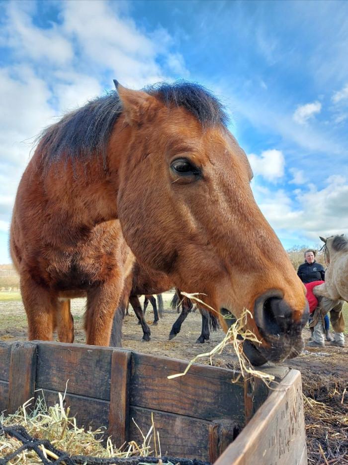 Waaraan kun je dominant gedrag van een paard herkennen