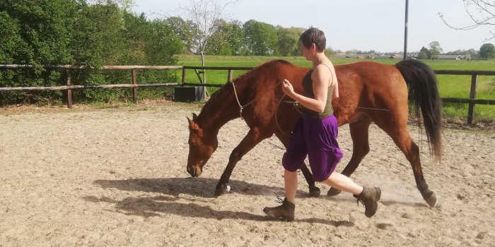 Lang en laag lopend paard; Liever niet!
