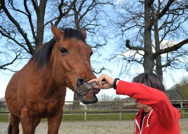 Paard tanden poetsen tips
