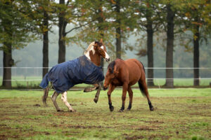 Emoties bij paarden