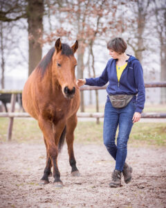 revalidatie paard